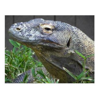 Komodo Drache-nahes hohes Postkarte