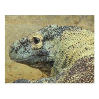 Komodo Drache Postkarte