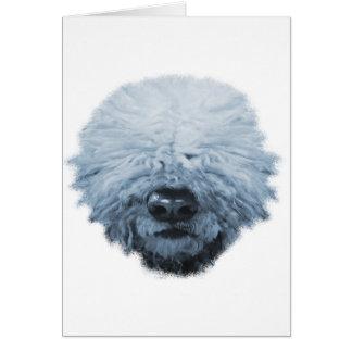 Komondor Hund Karte
