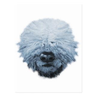 Komondor Hund Postkarte