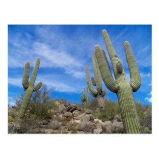 Kongreß, Arizona Postkarte