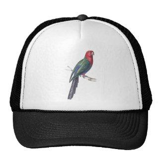 König Parakeet Trucker Caps