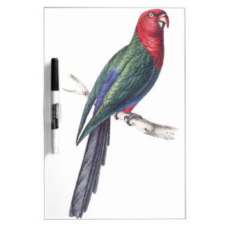 König Parakeet Memoboard