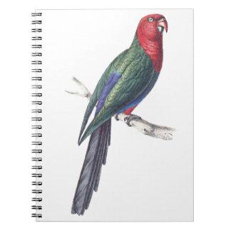König Parakeet Notiz Buch
