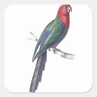 König Parakeet Quadratischer Aufkleber