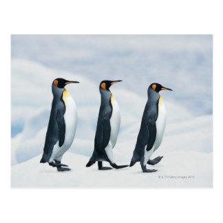 König Penguins, die in Singledatei gehen Postkarten