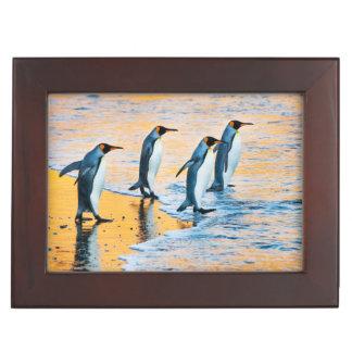 König Pinguine am Sonnenaufgang Erinnerungsdose