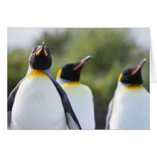 König-Pinguine Karte