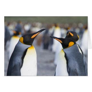 König Pinguine Karte
