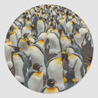 König-Pinguinkolonie, Falkland Runder Aufkleber