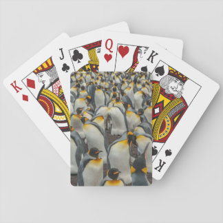 König-Pinguinkolonie, Falkland Spielkarten