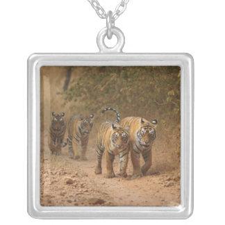 Königliche bengalische Tiger in Bewegung, Versilberte Kette