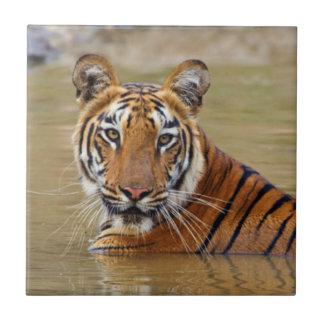 Königlicher bengalischer Tiger am waterhole Fliese