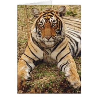 Königlicher bengalischer Tiger, Ranthambhor Karte