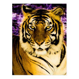 Königlicher Tiger Postkarte