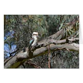 Kookaburra Geburtstags-Karte Karte