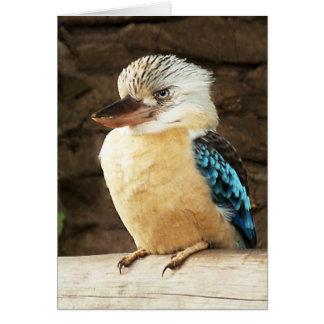 Kookaburra Karte