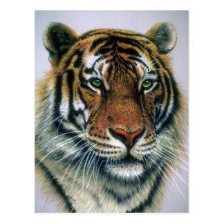 Kopf des sibirischen Tigers Postkarte