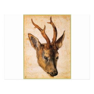 Kopf eines Hirsches durch Albrecht Durer Postkarte