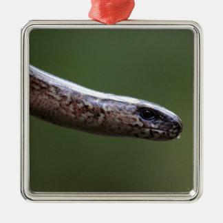 Kopf von einem Slowworm, Anguis zerbrechlich Quadratisches Silberfarbenes Ornament