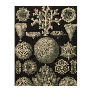 Koralle Ernst Haeckels Hexacorallia Holzwanddeko