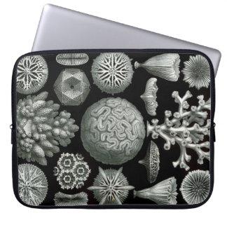 Koralle Ernst Haeckels Hexacorallia Laptop Sleeve