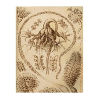 Koralle Ernst Haeckels Pennatulida Holzdruck