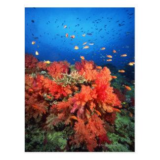Koralle und Fische Postkarte