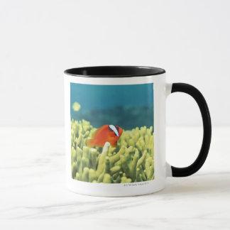 Korallenriff, das mit tropischen Fischen ausgießt Tasse