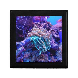 Korallenriff Erinnerungskiste