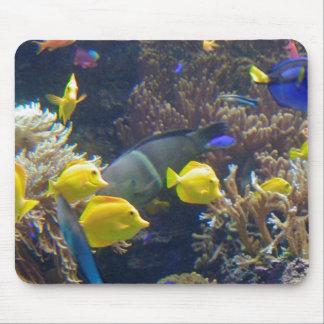 Korallenriff-Fische Mousepads