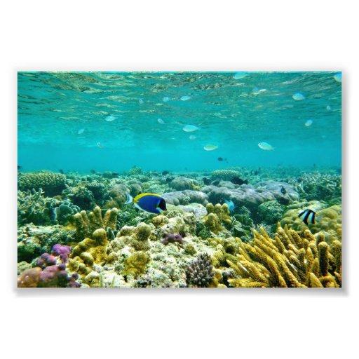 Korallenriff Fotografien