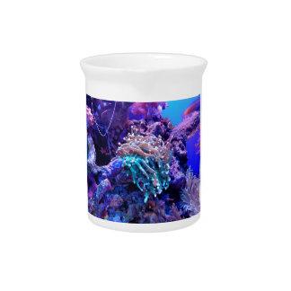 Korallenriff Krug