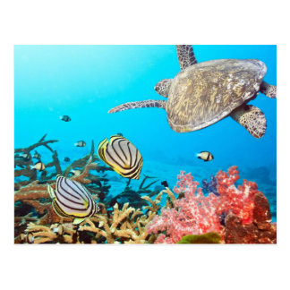 Korallenriff-Schildkröte Naturescape Postkarte