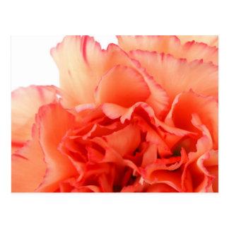 Korallenrote Gartennelken-Blumen-Blüte Postkarten