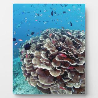 Korallenrote Insel Fotoplatte