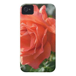 Korallenrote Rose Case-Mate iPhone 4 Hülle