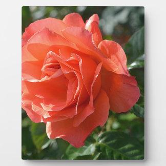Korallenrote Rose Fotoplatte