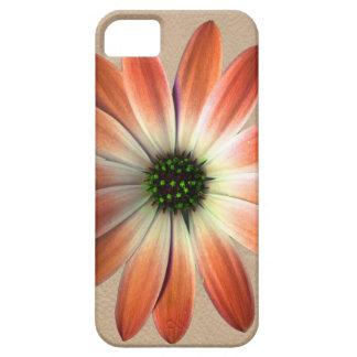 Korallenrotes Gänseblümchen auf Muschelhintergrund iPhone 5 Schutzhülle