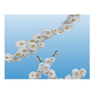 Korea-Kirschblüten weiß Postkarte