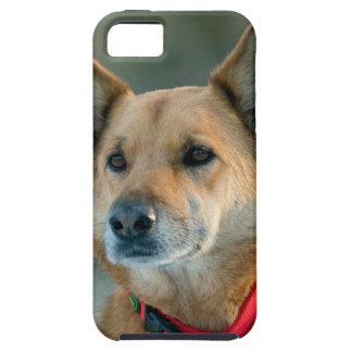 Köterhund mit rotem Kragen iPhone 5 Hüllen