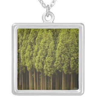 Koya Sugi Zedern-Bäume Versilberte Kette