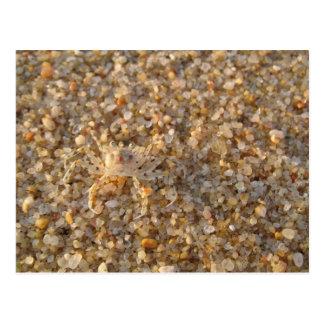 Krabbe auf dem Strand Postkarte