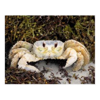 Krabbe auf Strand Postkarte