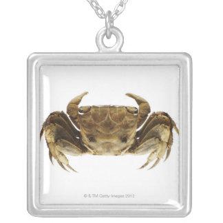 Krabbe auf weißem Hintergrund Versilberte Kette