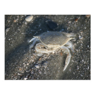Krabbe Postkarte