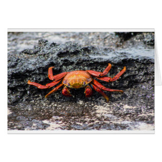 Krabbe Sally Lightfoot Karte