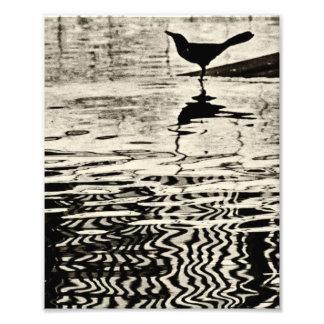Krähe mit Reflexion auf Wasser - Fotografie