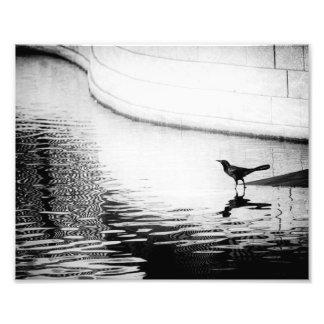 Krähe reflektiert im Wasser - B&W Fotografie
