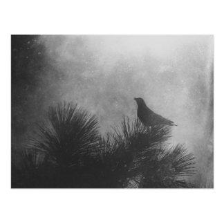Krähe und Kiefer Postkarte
